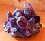 Amethyst ( Druse ) more than 700 grams